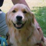Nellie's Video Still, Happy Dog