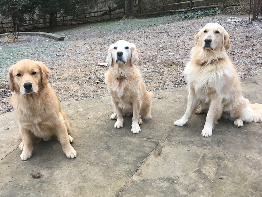 Zeke, Nellie, and Gus