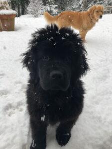 Emmi in snow