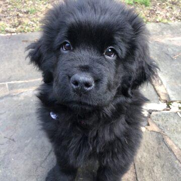 Puppy Emmi